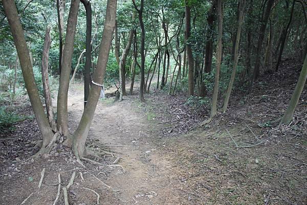 0114鶯歌石步道 (19).JPG