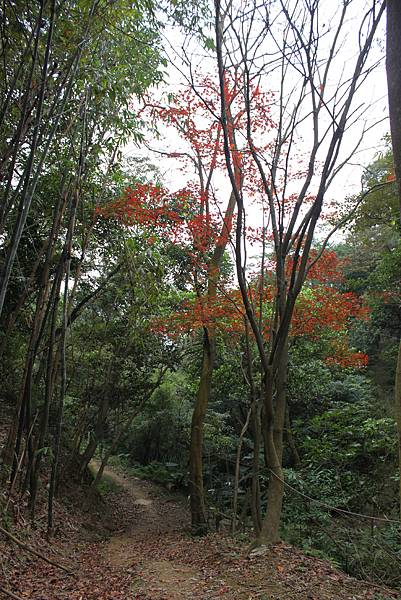 0114鶯歌石步道 (20).JPG