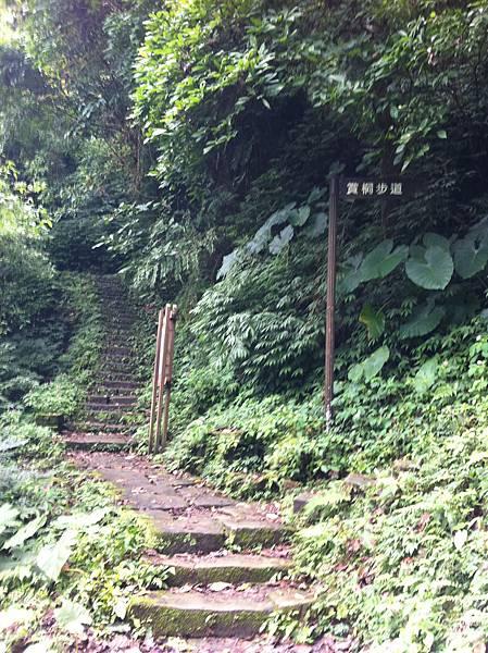 1010128土城天上山 (8).JPG