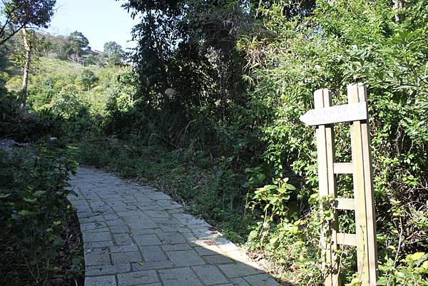 0205大山背山步道 (5).JPG
