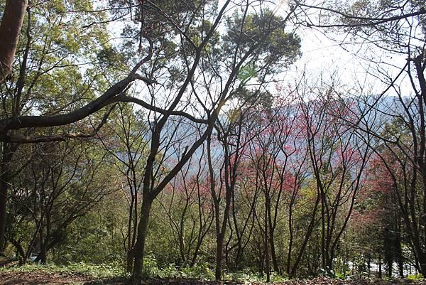 0205大山背山步道 (6).JPG