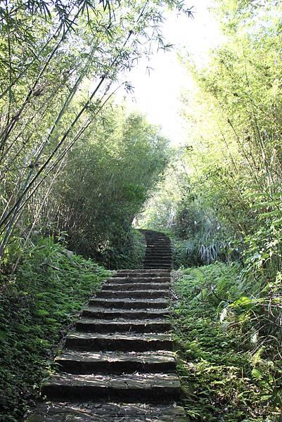 0205大山背山步道 (11).JPG