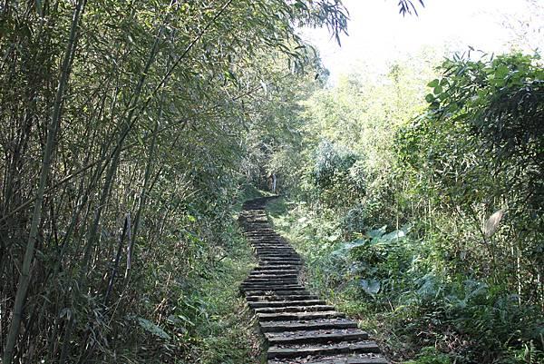 0205大山背山步道 (17).JPG