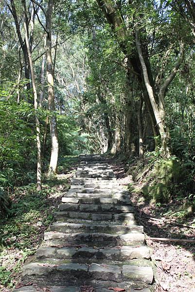 0205大山背山步道 (20).JPG