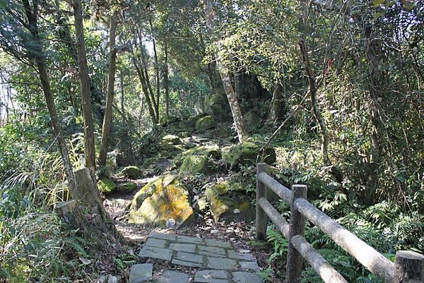 0205大山背山步道 (25).JPG