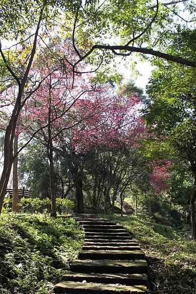 0205大山背山步道 (45).JPG