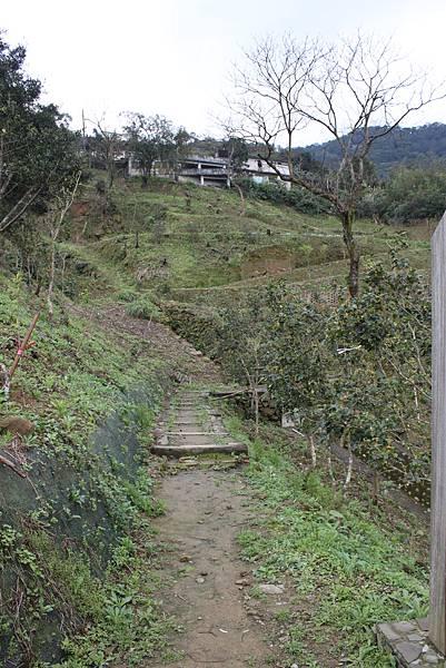 0219聖母環山步道六寮崙山 (5)