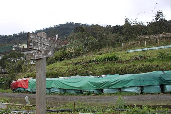 0219聖母環山步道六寮崙山 (9)