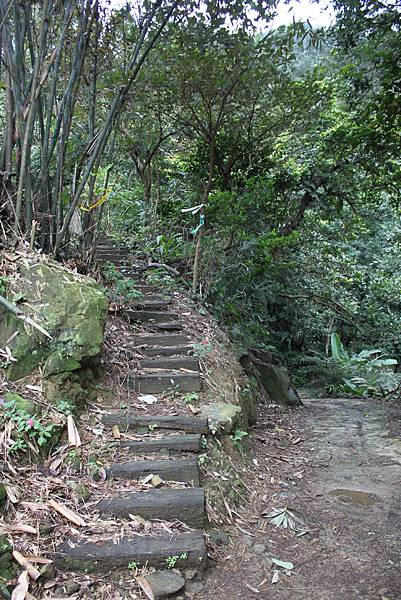 0219聖母環山步道六寮崙山 (11)
