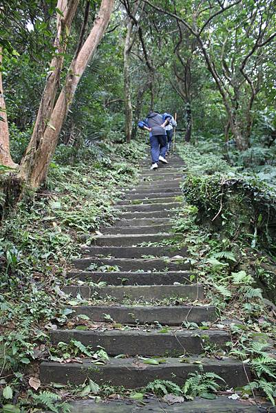 0219聖母環山步道六寮崙山 (16)