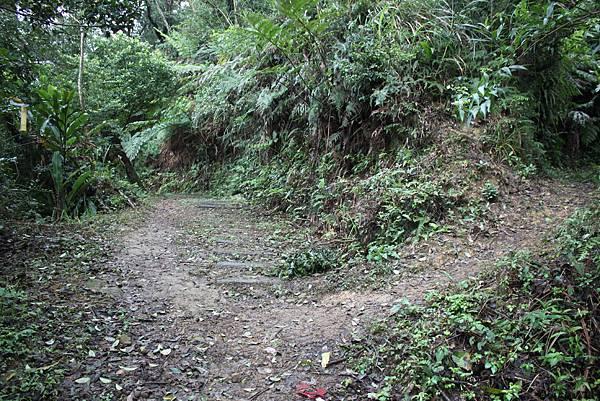 0219聖母環山步道六寮崙山 (21)
