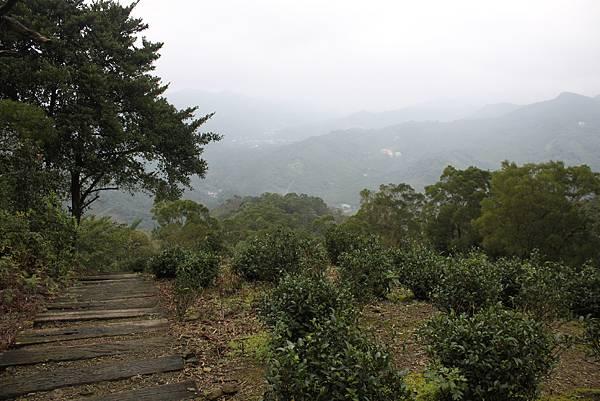 0219聖母環山步道六寮崙山 (40)