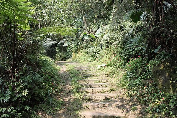 0404漫步土庫岳 (5)
