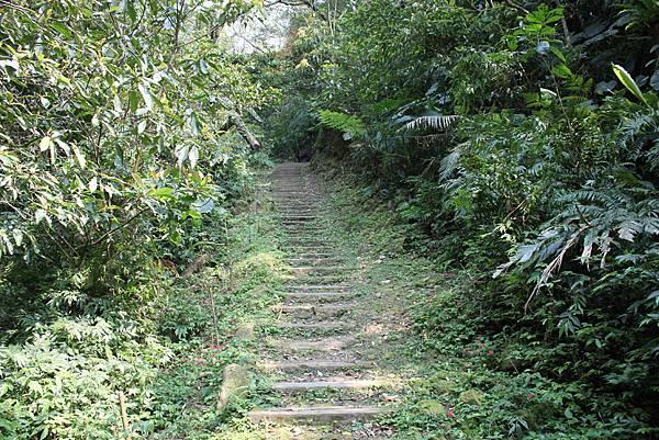 0404漫步土庫岳 (7)
