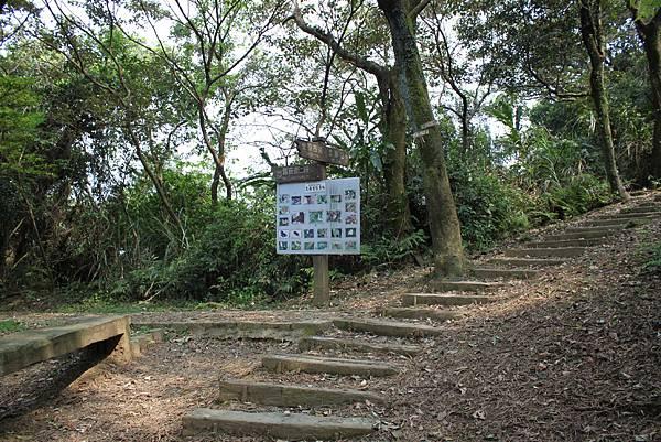 0404漫步土庫岳 (10)