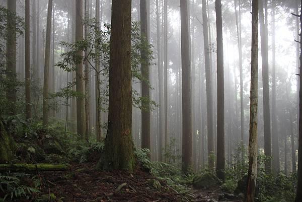 0407苗栗第一高山加里山 (5)
