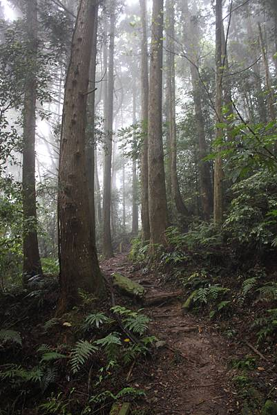 0407苗栗第一高山加里山 (25)