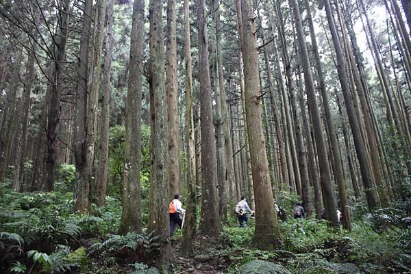0407苗栗第一高山加里山 (27)
