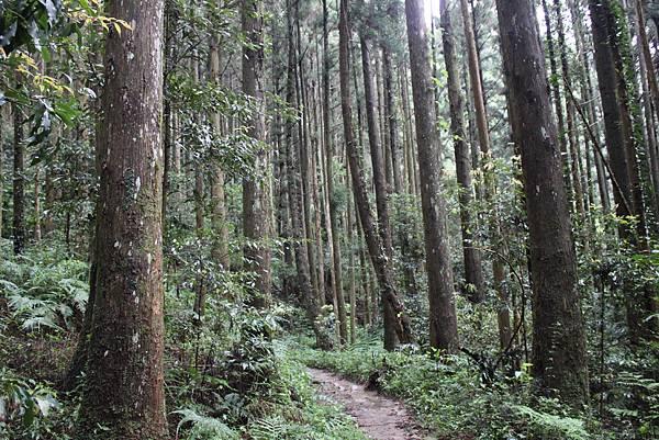 0407苗栗第一高山加里山 (28)