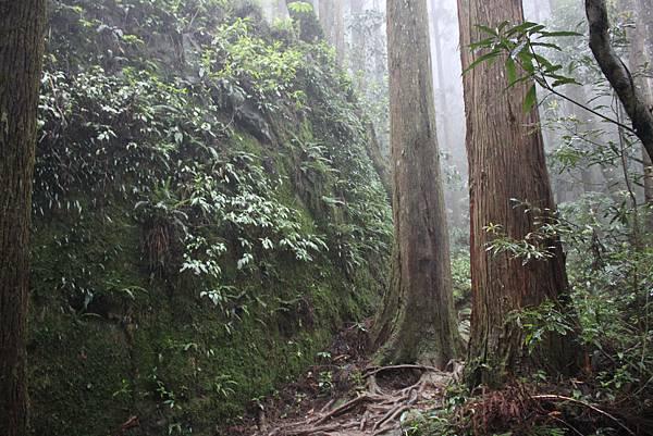 0407苗栗第一高山加里山 (33)