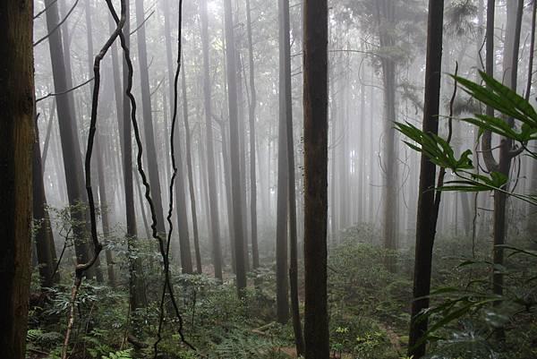 0407苗栗第一高山加里山 (34)