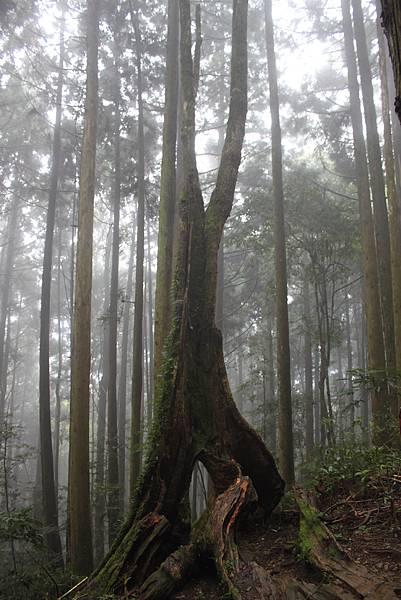 0407苗栗第一高山加里山 (35)