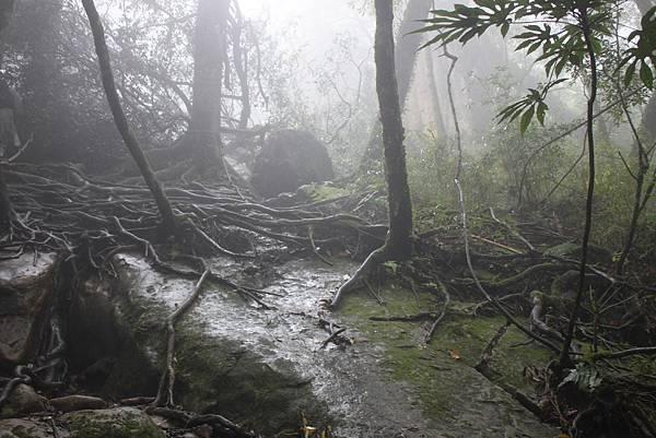 0407苗栗第一高山加里山 (45)