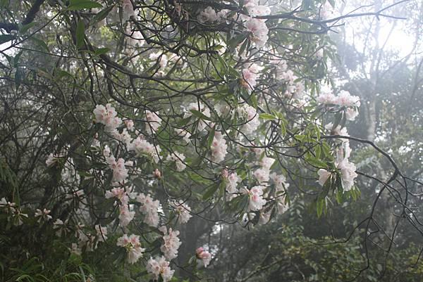 0407苗栗第一高山加里山 (49)
