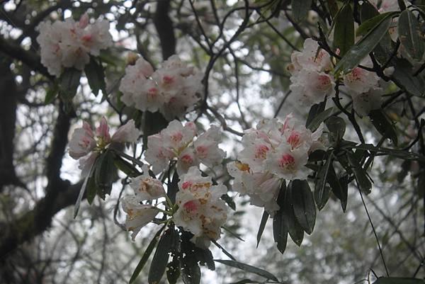 0407苗栗第一高山加里山 (50)