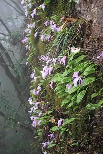 0407苗栗第一高山加里山 (58)