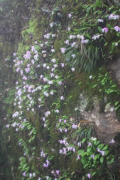 0407苗栗第一高山加里山 (60)