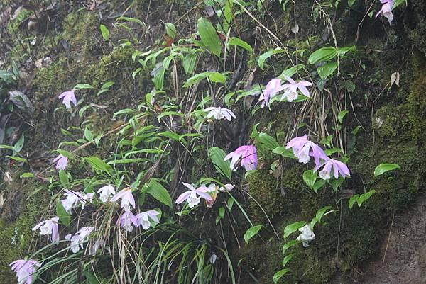 0407苗栗第一高山加里山 (63)