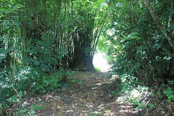 0617永安景觀步道及雲海山 (22)