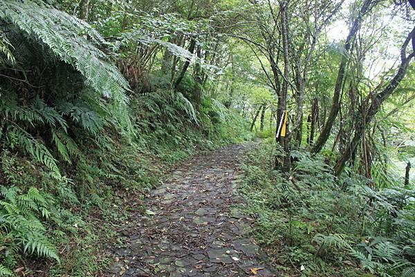0617永安景觀步道及雲海山 (41)