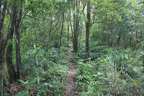 0617永安景觀步道及雲海山 (43)