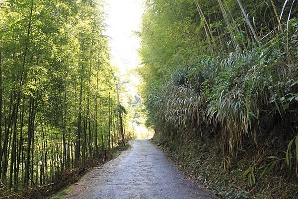 0707杉林溪忘憂森林 (5)