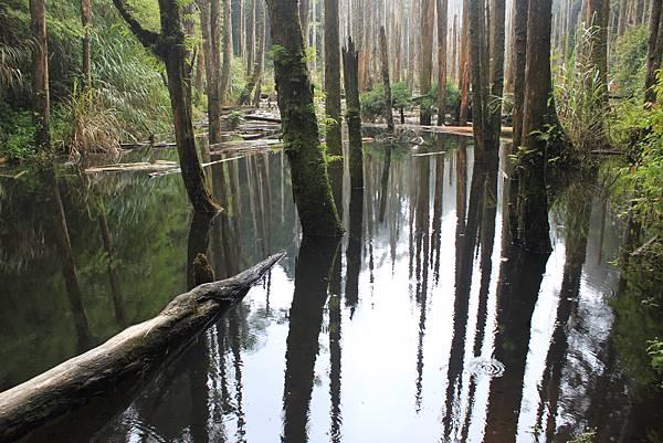 0707杉林溪忘憂森林 (15)