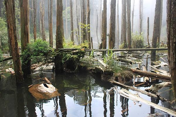 0707杉林溪忘憂森林 (16)