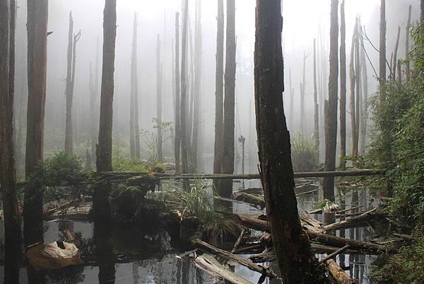 0707杉林溪忘憂森林 (17)