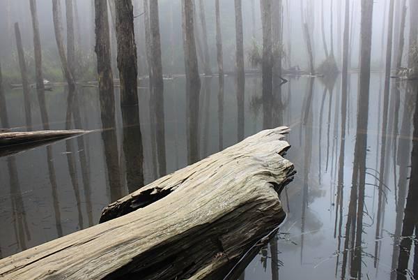 0707杉林溪忘憂森林 (19)