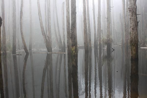 0707杉林溪忘憂森林 (20)