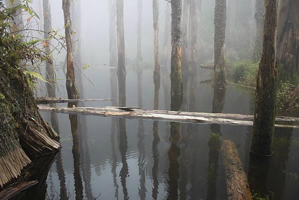 0707杉林溪忘憂森林 (38)