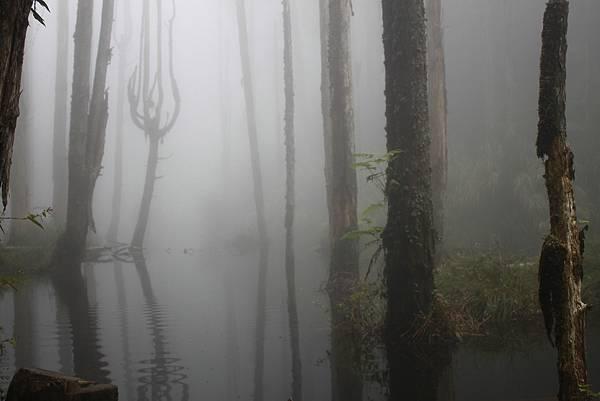 0707杉林溪忘憂森林 (41)