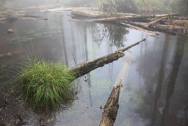 0707杉林溪忘憂森林 (43)