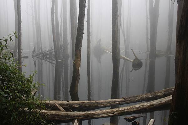 0707杉林溪忘憂森林 (47)