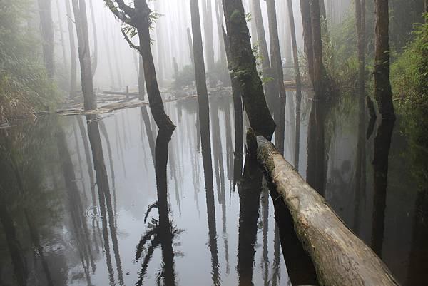 0707杉林溪忘憂森林 (49)