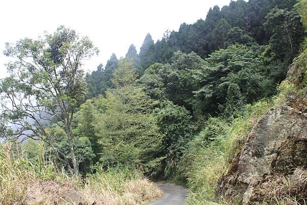 0707杉林溪忘憂森林 (50)