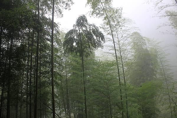 0707杉林溪忘憂森林 (53)