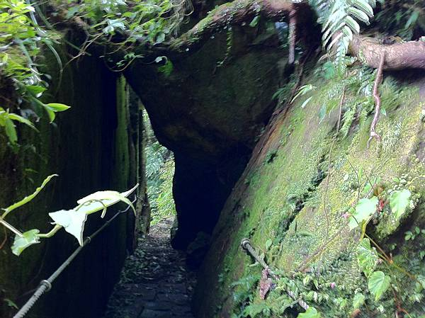 0804金龜岩及猴洞步道 (14)
