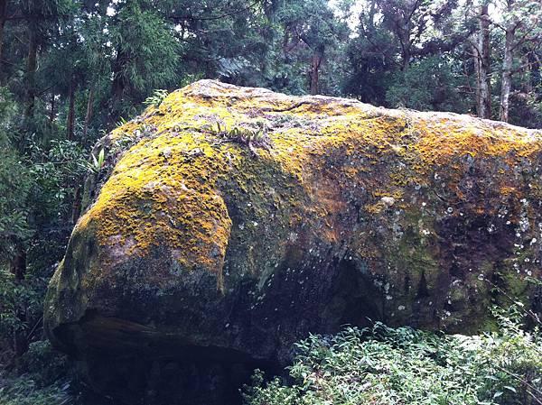 0804金龜岩及猴洞步道 (32)